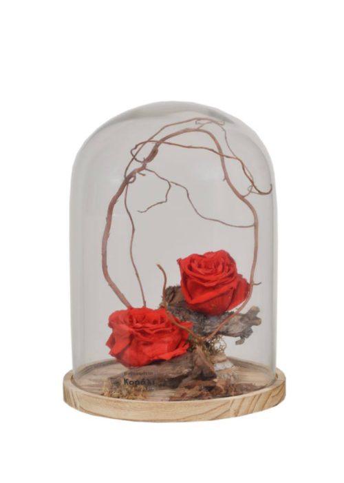 καμπάνα κόκκινο τριαντάφυλλο για παντα