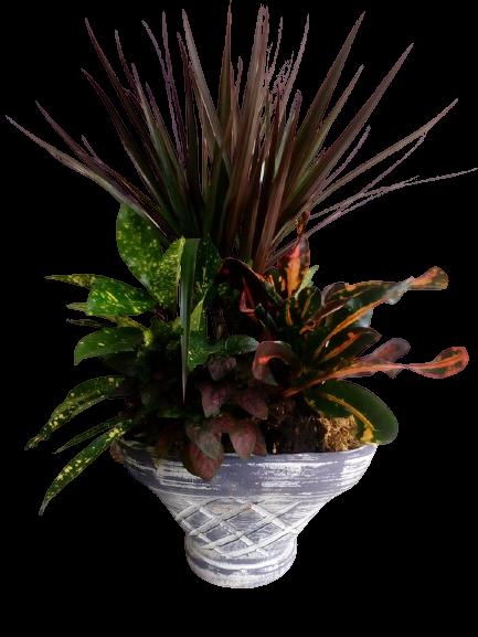 σύνθεση με φυτά εσωτερικού χώρου
